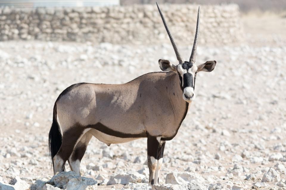 Salar de Etosha (Namibia)