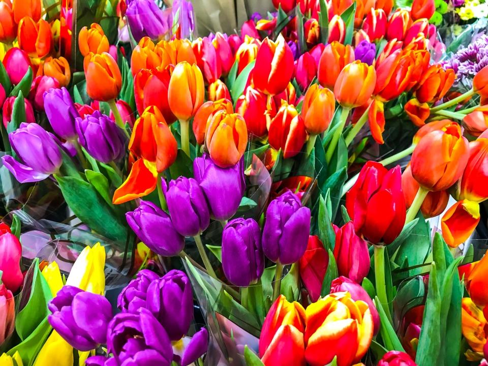 Mercado de las flores (Aalsmeer, Holanda)
