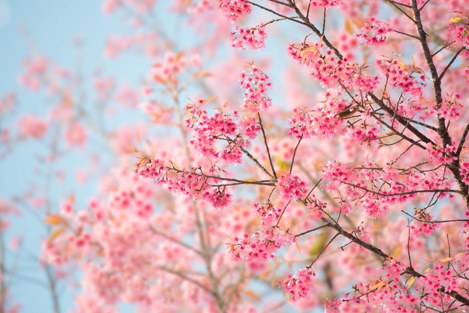 Abril: Japón