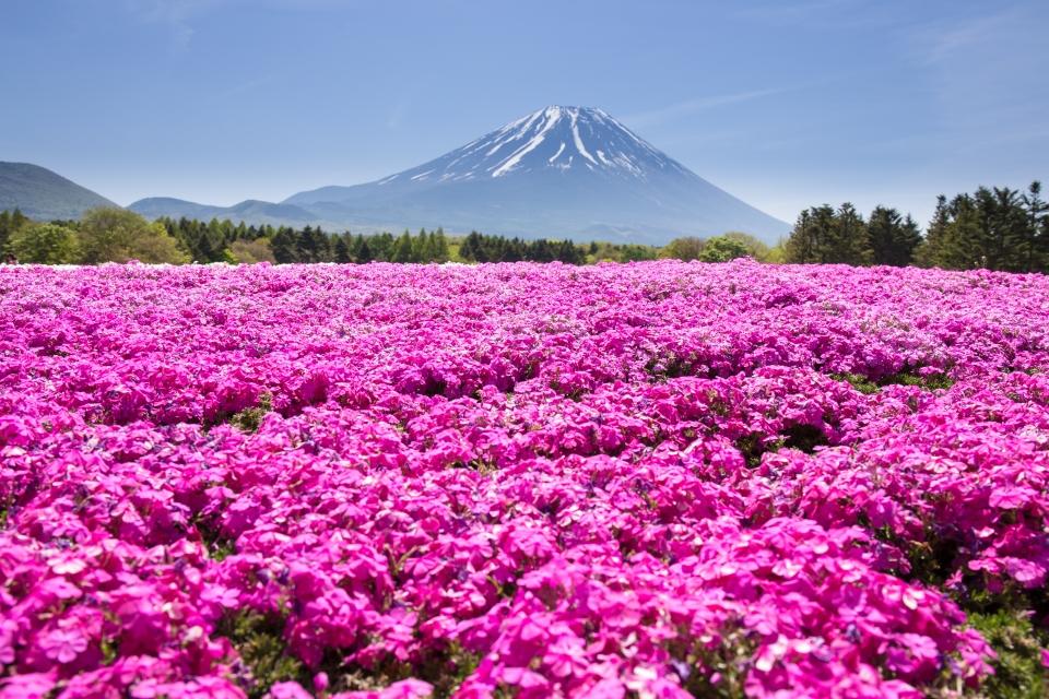 Base of Mount Fuji