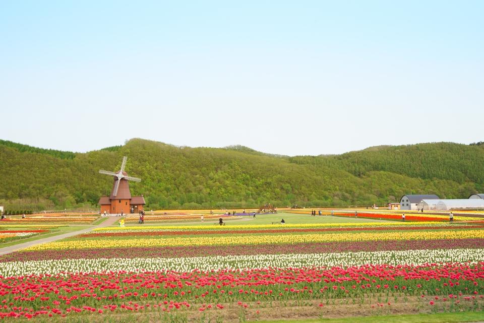 Kamiyubetsu Tulip Park, Hokkaido