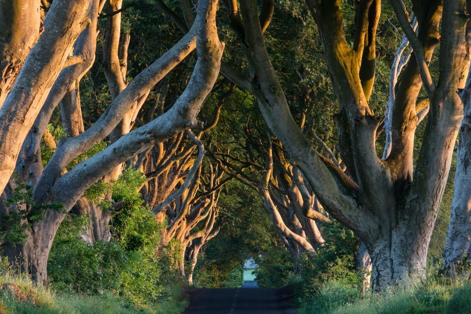 Dark Hedges (Irlanda del Norte)