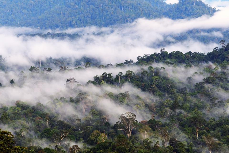 Danum Dalley, Borneo