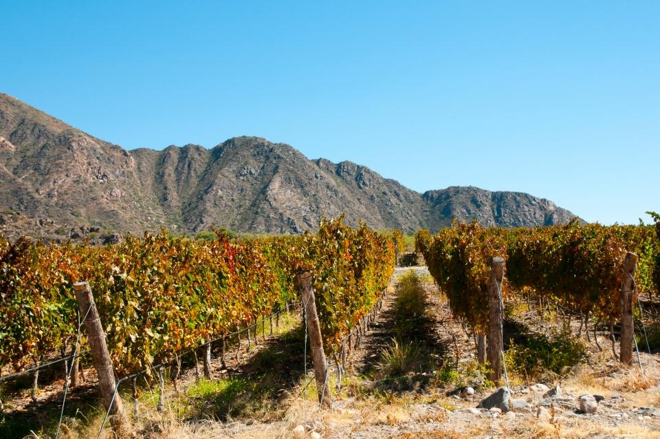 2. Wine tasting in Mendoza