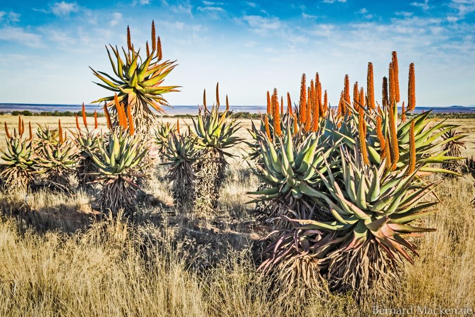 2.Der Karoo Nationalpark