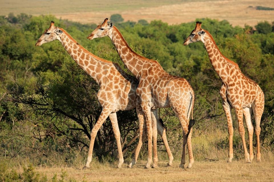 4.Ndumo Game Reserve
