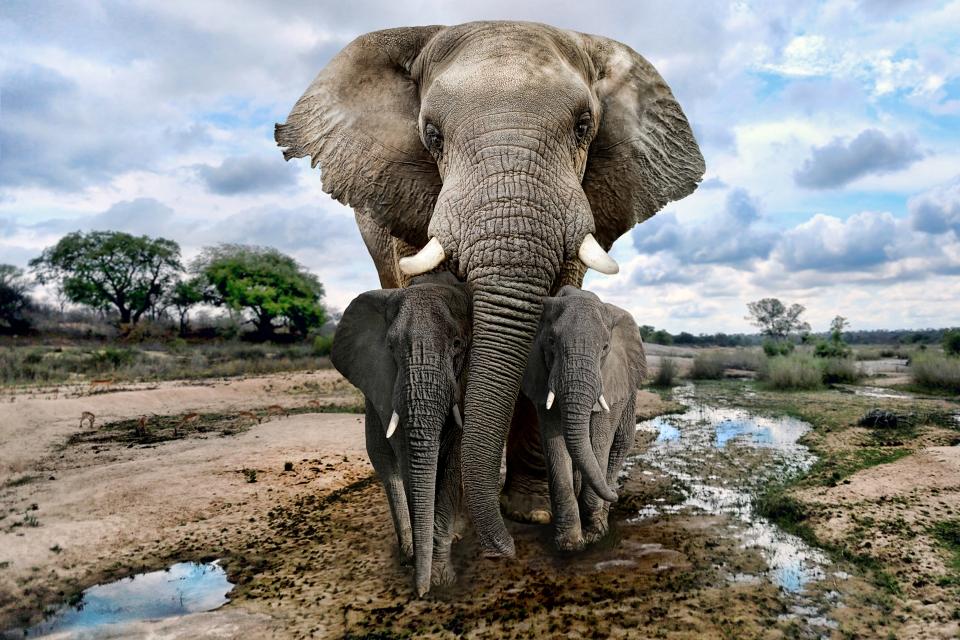 5.Der Addo Elefanten-Nationalpark