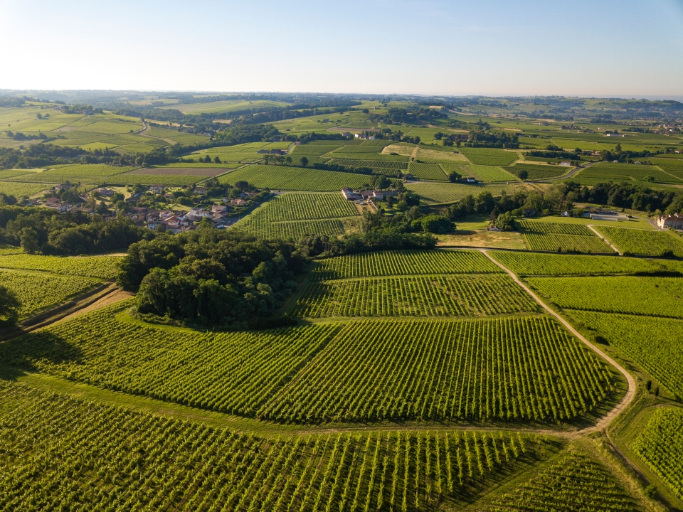 Bordeaux has six wine routes to choose from
