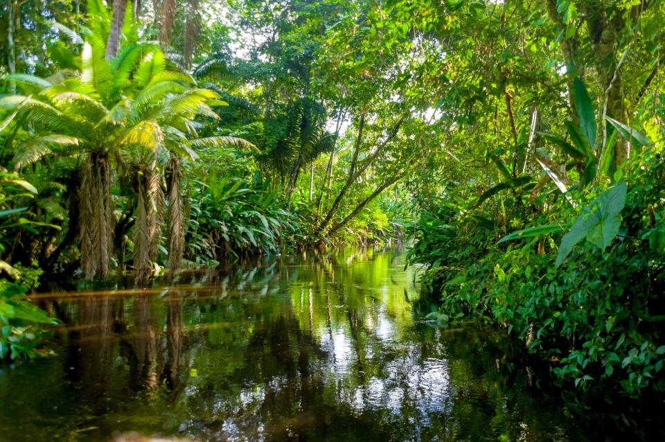 ¿Quieres vivir una aventura amazónica?