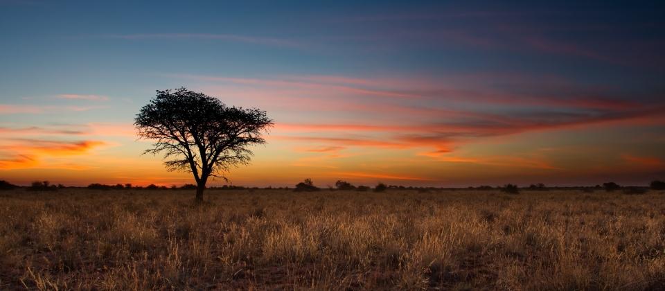 Desierto de Kalahari, África del Sur