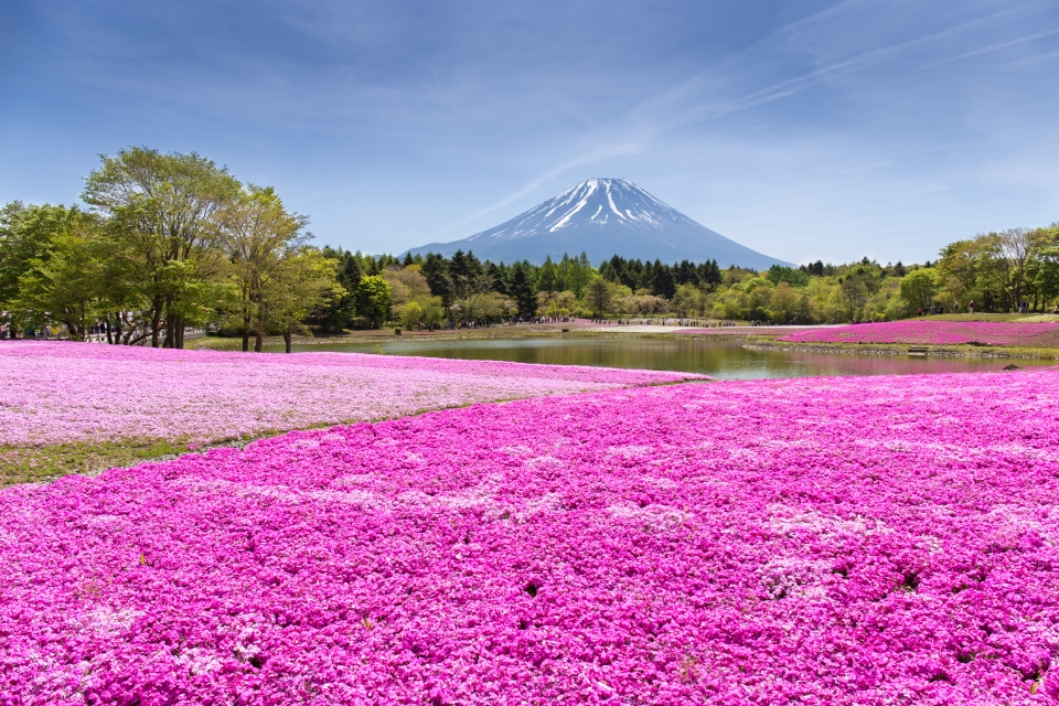 Der Fuji, Japan