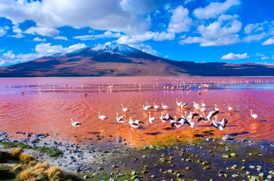 La laguna Colorada en Bolivia