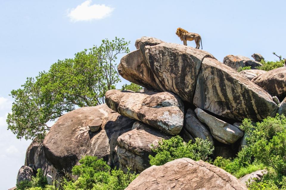 Pride Rock, Serengeti National Park