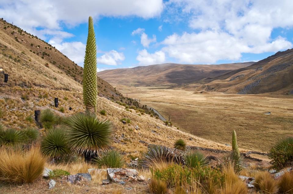 La planta de floración más alta del mundo