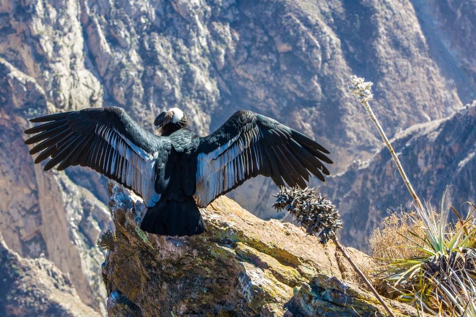 El ave más grande del mundo