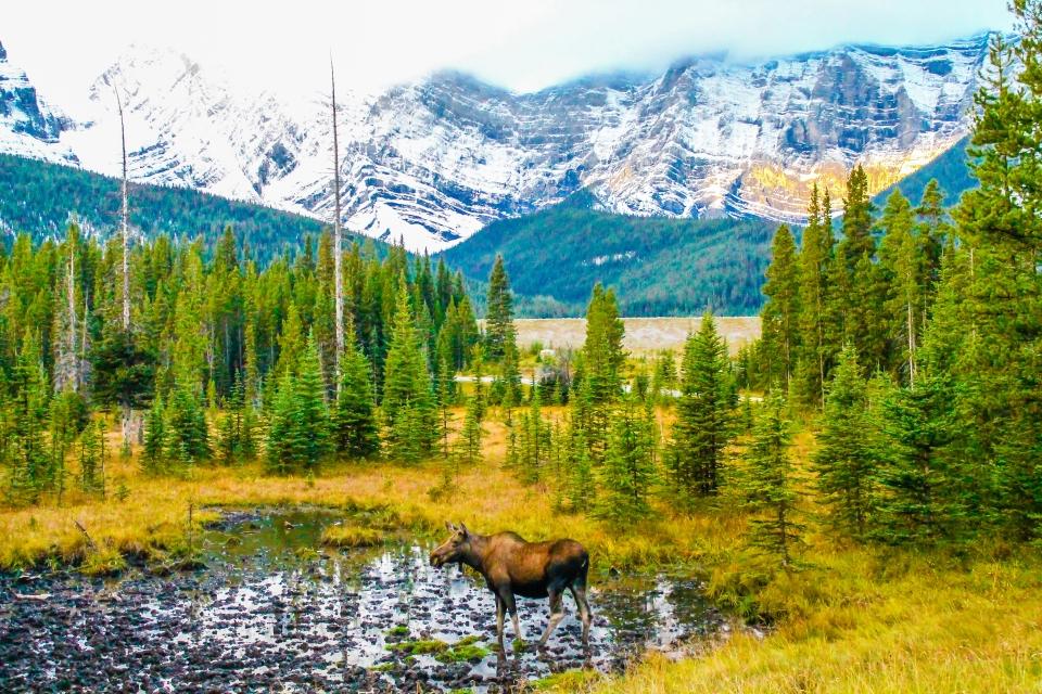 L'Alaska, USA