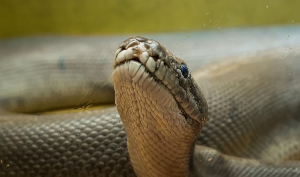 Londres : Reptile House