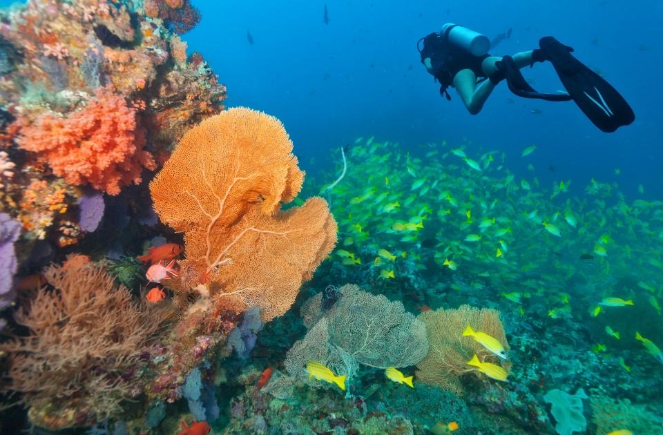 Coral Reef, Maldive