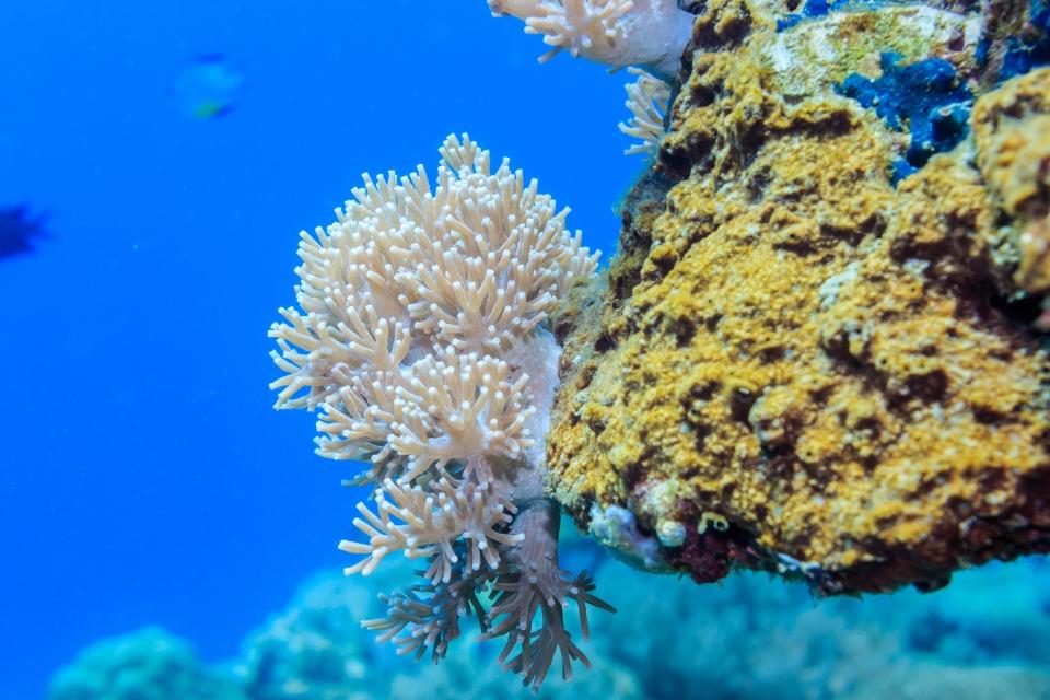 Dedalus Reef, Egitto