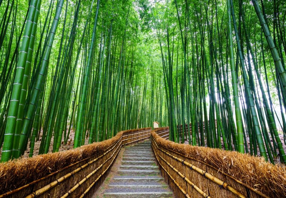 Arashiyama Bamboo Forest, Arashiyama, Japan