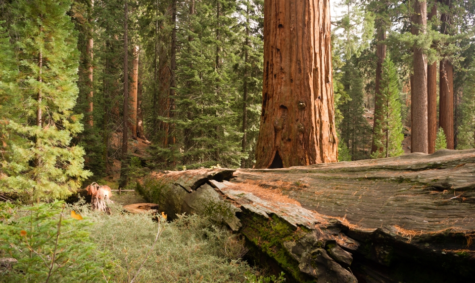 Grizzly Creek Redwoods State Park, California