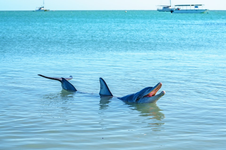 Avvistamento di delfini e whale watching, Australia