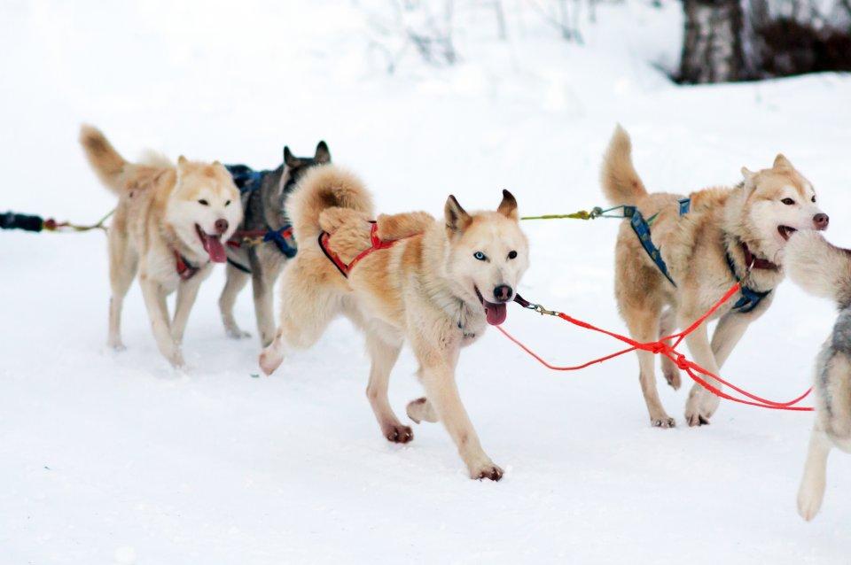 Incontro con gli Huskies, Finlandia