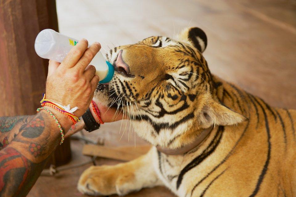 Santuario Lionsrock Big Cat, Sudafrica