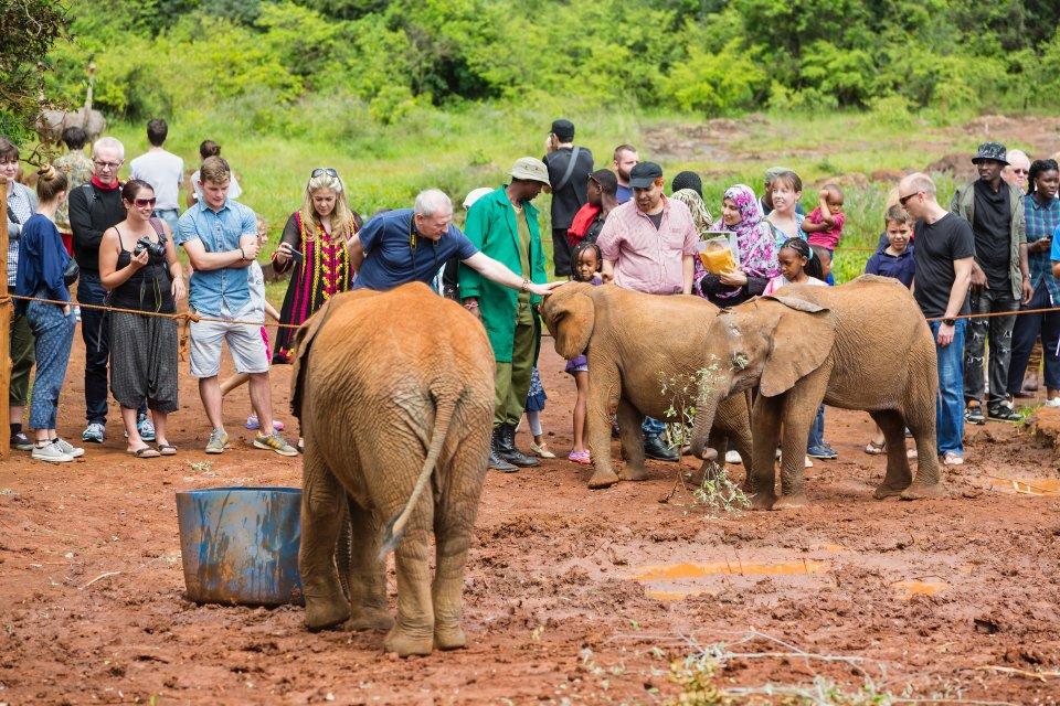 Orfanotrofio degli elefanti, Kenya