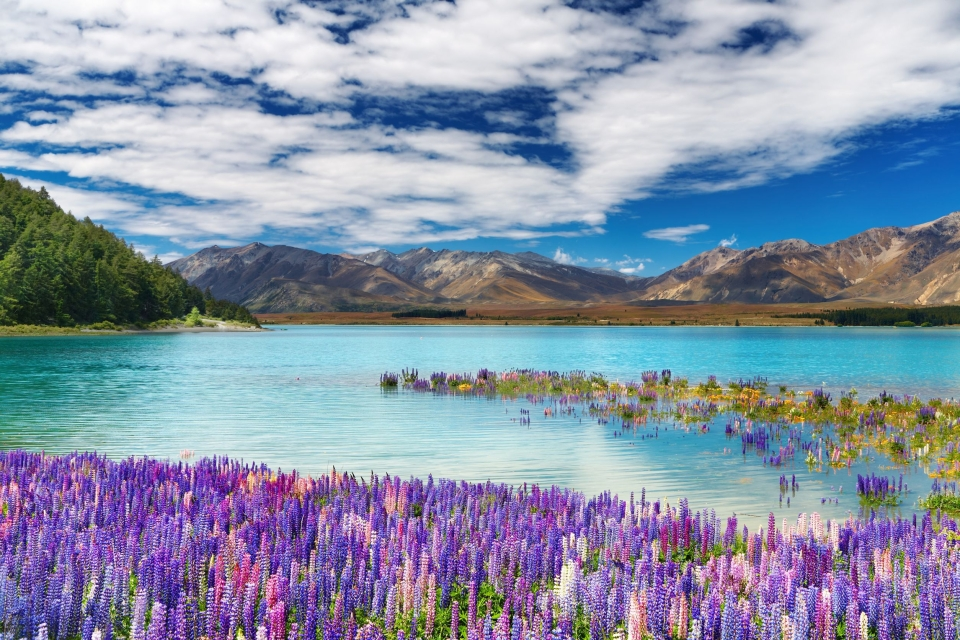 La Nouvelle-Zélande :  Lake Tekapo