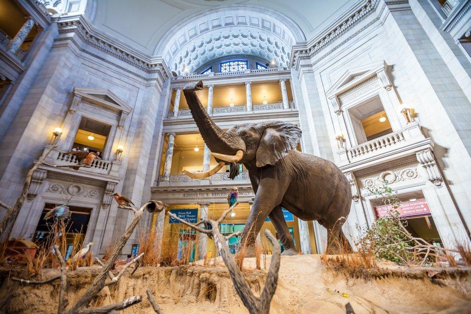 Le musée d'histoire naturelle de Washington
