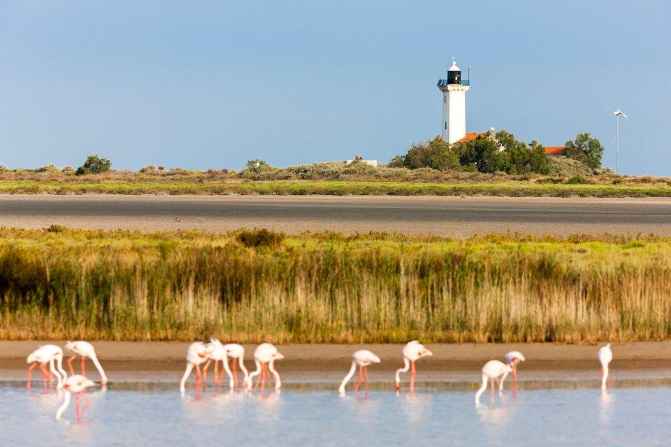 1. The Camargue coast