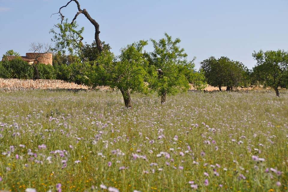 La flora , Campos en las islas Baleares , España
