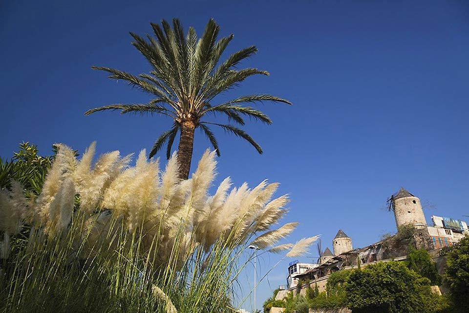La flora , Palmeras y plantas acuáticas , España