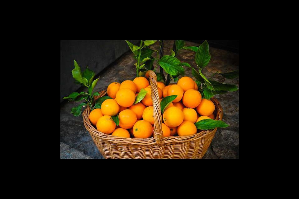 La flora , Canasta con naranjas , España