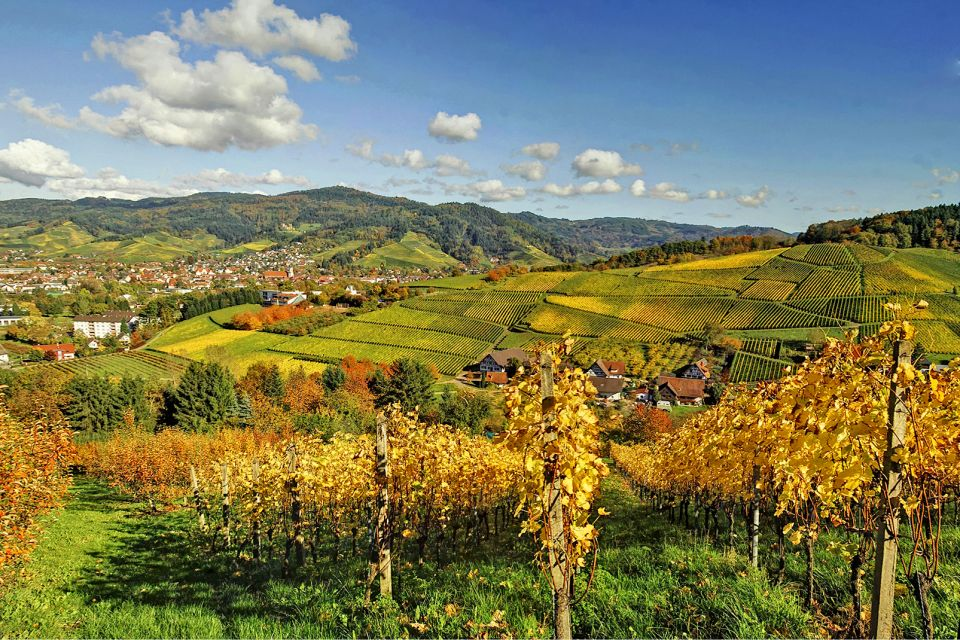Les paysages, Japanese Fall Foliage, Vineyard, Black Forest, Germany, Autumn