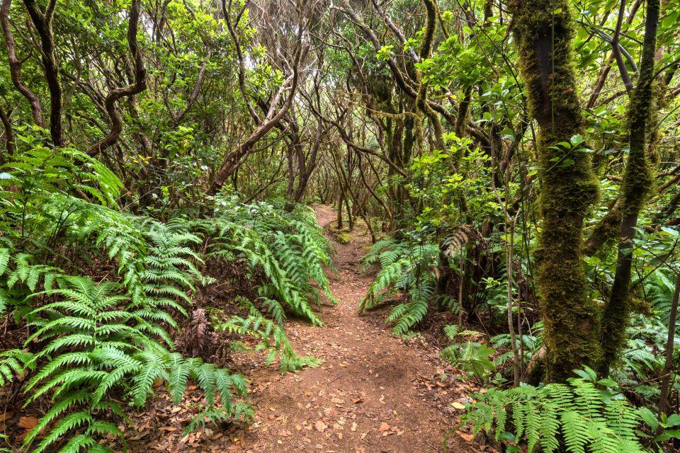 Les paysages, anaga, espagne, canaries, europe, ténérife, forêt, tropicale