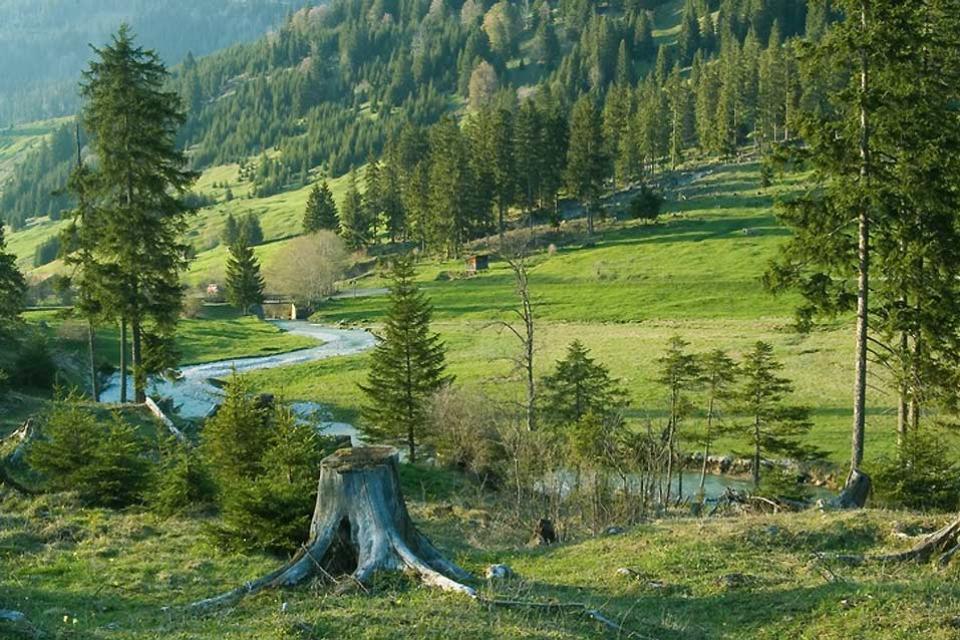 Die Deutsche Alpenstraße , Eine Waldlichtung in den Alpen , Deutschland
