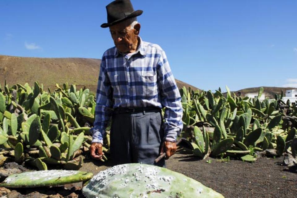 Lanzarote el jard n de cactus canarias espa a - Jardin de cactus madrid ...