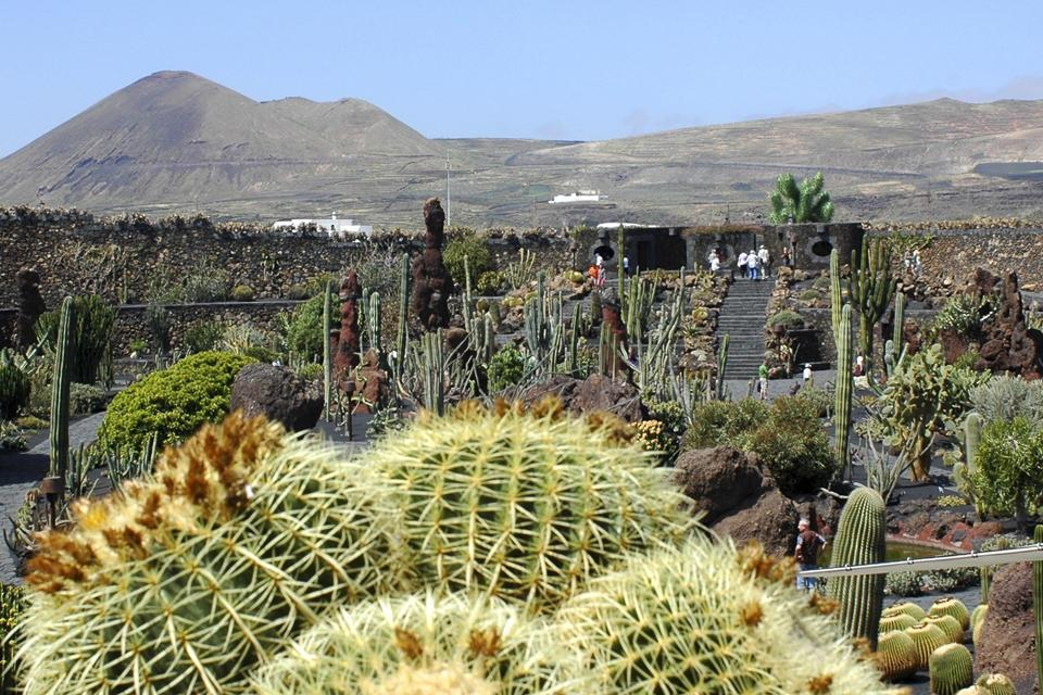 lanzarote le jardin de cactus canaries espagne. Black Bedroom Furniture Sets. Home Design Ideas