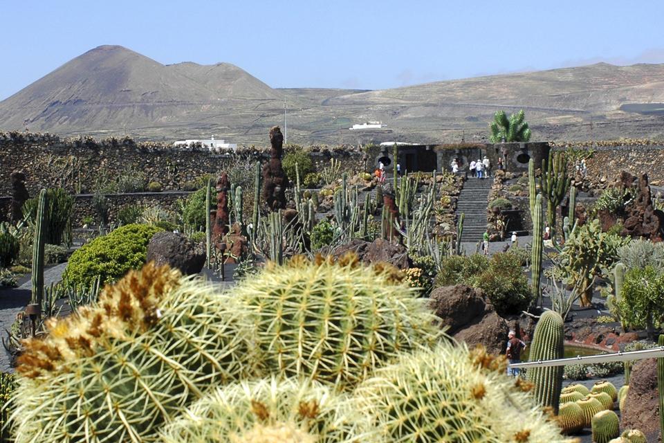 Lanzarote le jardin de cactus canaries espagne for Jardineras de cactus