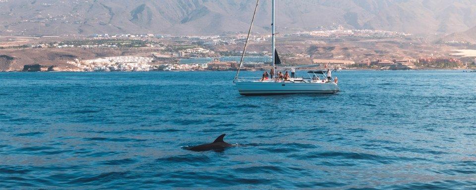 La fauna marina
