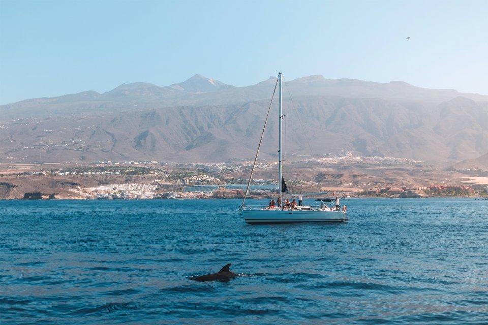 La fauna marina, Fauna y flora, Canarias