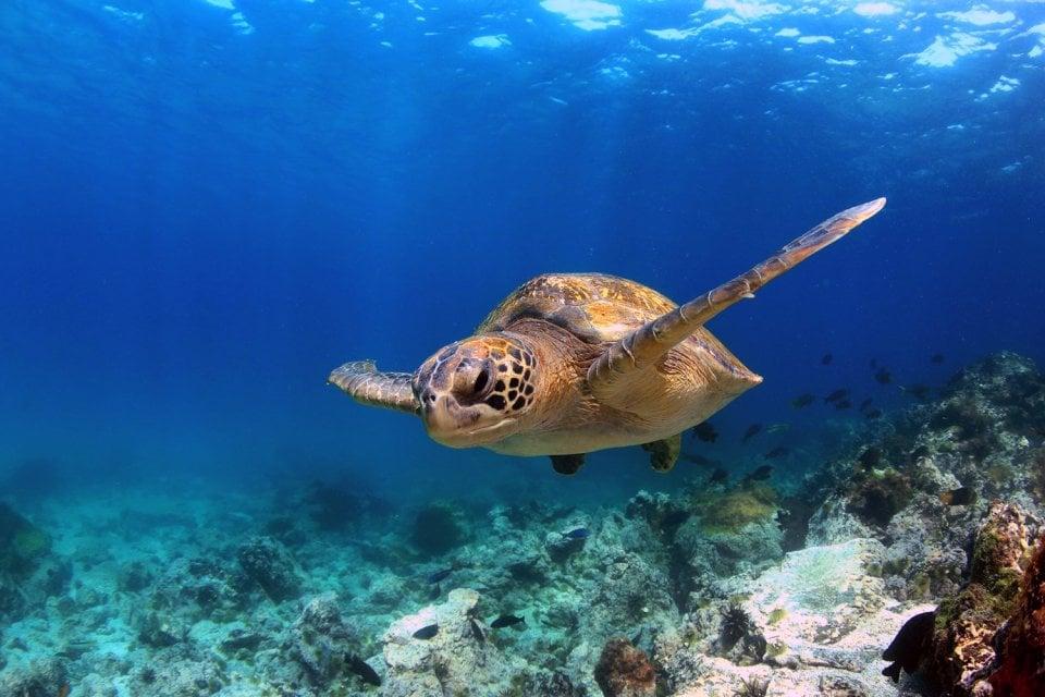 Les reptiles marins, La faune marine, La faune et la flore, Canaries