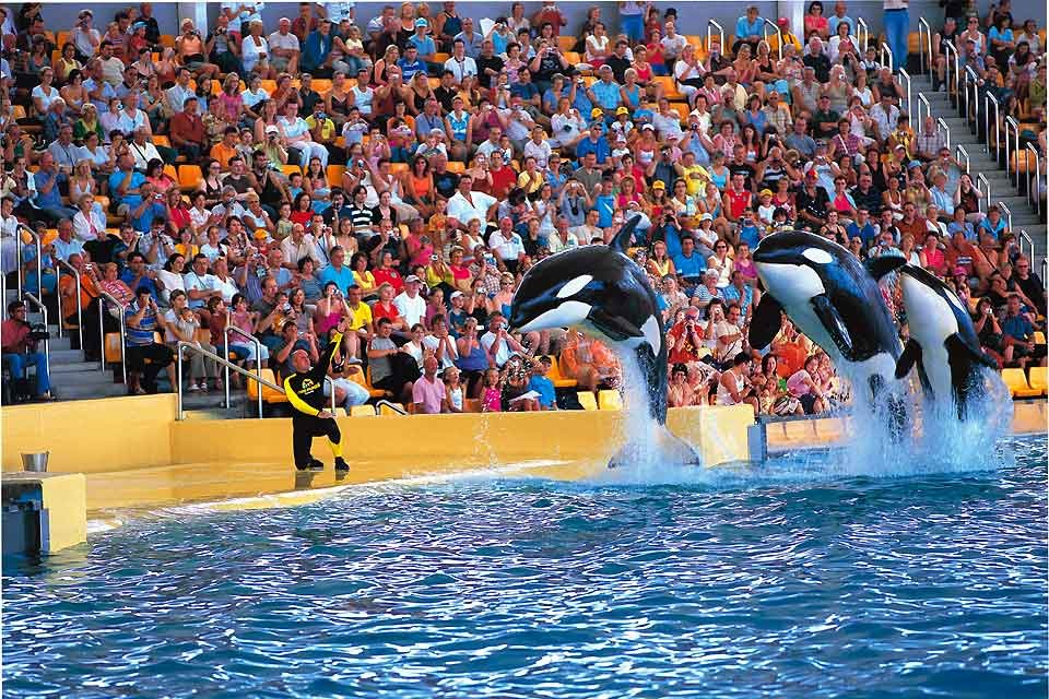 Dans les parcs aquatiques, La faune marine, La faune et la flore, Canaries