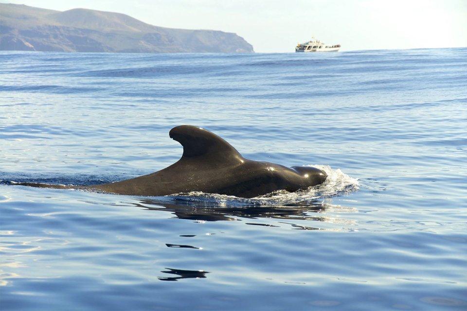 La fauna marina , En busca de las ballenas , España