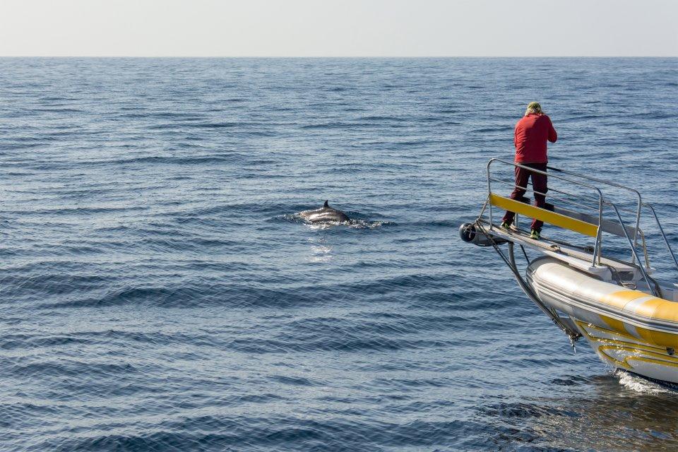 La fauna marina , Delfines en Los Gigantes , España