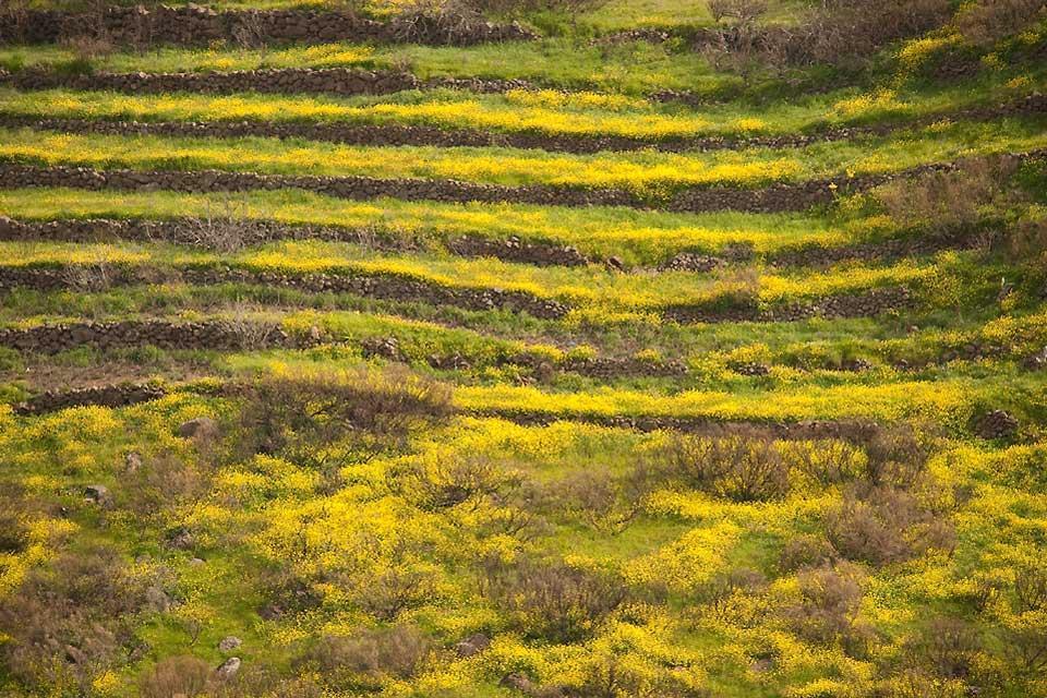 La flore , Un paradis pour les botanistes , Espagne