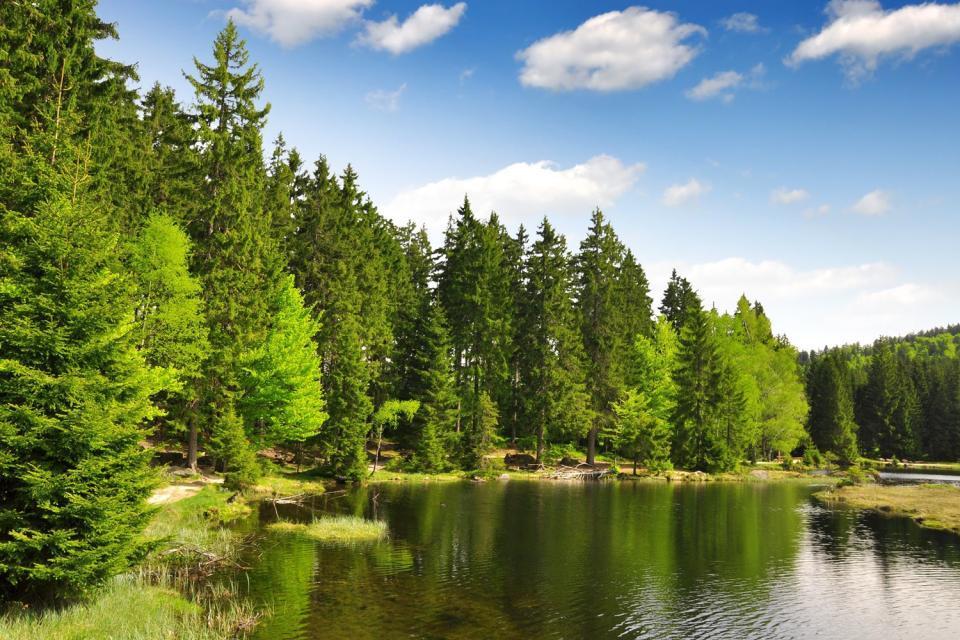 El Parque Nacional del Bosque Bávaro , Alemania