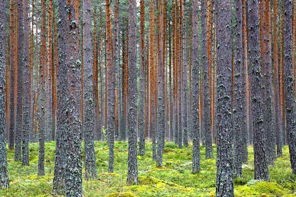 Der Nationalpark von Lahemaa , Estland